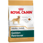 Royal-Golden-Retriever-25-Adult